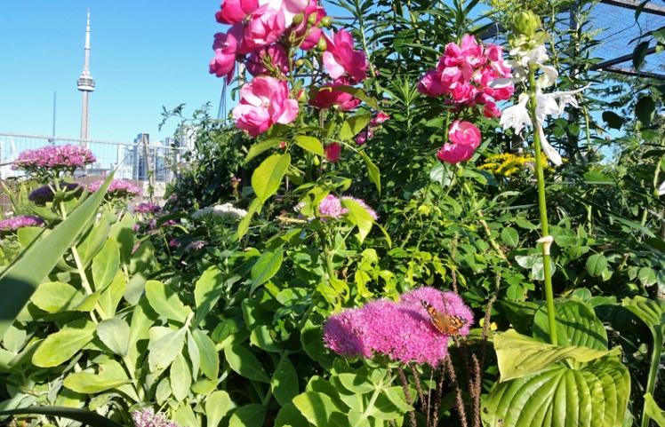 Community Garden and CNLR11